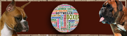 boxer_logo