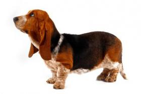 mpase hund